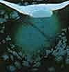 גלזורה ירוק - 1