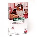 """אדוונטאג' 250 לכלבים במשקל 10-25 ק""""ג"""