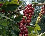 אוגנדה בוגיסו