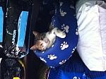 מיטה מבד מפנקת לכלב/חתול