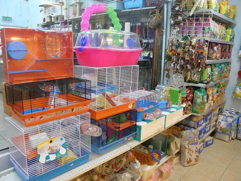 מולי חנות חיות 10