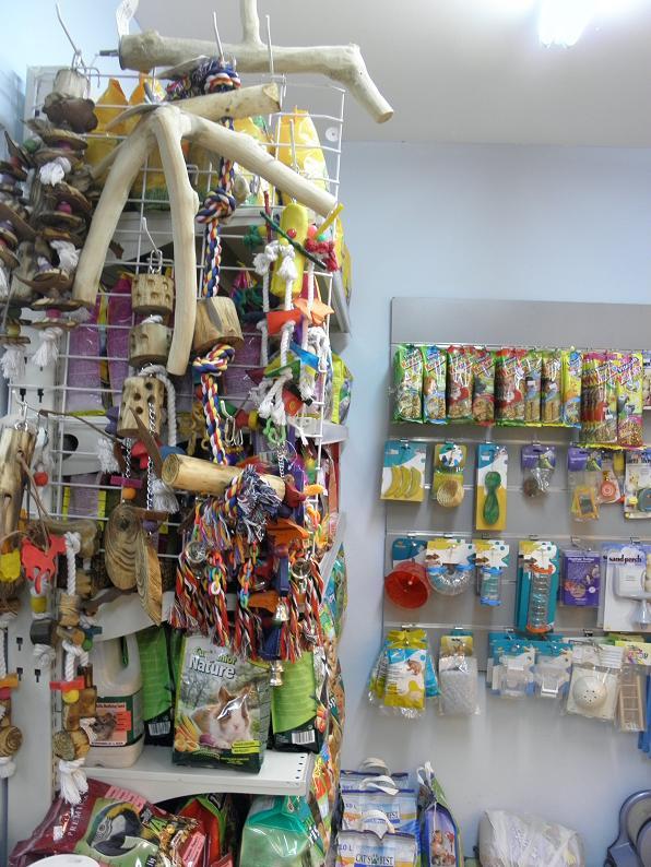 מולי חנות חיות 7