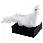 יונת השלום , יונה לבנה , יונות לבנות , יונה של שלום ,