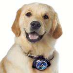 LeashLocket - רצועת כלב נשלפת L