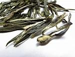 תה ירוק - לונג ג'ין פרמיום