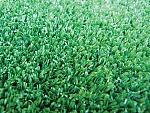 """דשא סינטטי 25 מ""""מ"""